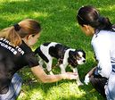 Kurs wychowania psa – pies domowy