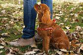 Szkolenie psów w grupie podstawowej