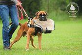 Szkolenie dla psów na stopień psa obronnego (IPO)