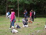 Szkolenie psów w grupie dla zaawansowanych