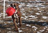"""Szkolenie """"(Prawie) Grzeczny pies"""""""
