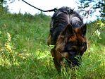 Warsztaty węchowe dla psów