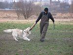 Kurs dla psów i właścicieli – Obrona