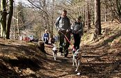 Warsztaty Dog Nordic Walking