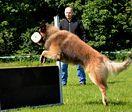 Kurs obedience dla psów i właścicieli