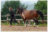 """Warsztaty """"Koń naturalny, naturalny jeździec"""""""