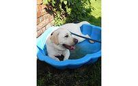 Kurs tresury psów - podstawowy