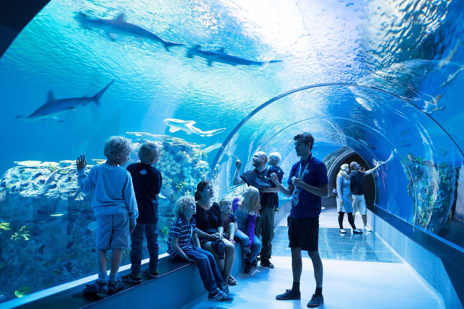 Oceanarium w Polsce. Sprawdź, gdzie można zobaczyć rekiny - WP Turystyka