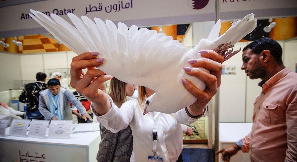 Targi w Doha. Prezentacja jednego z pierzastych bohaterów