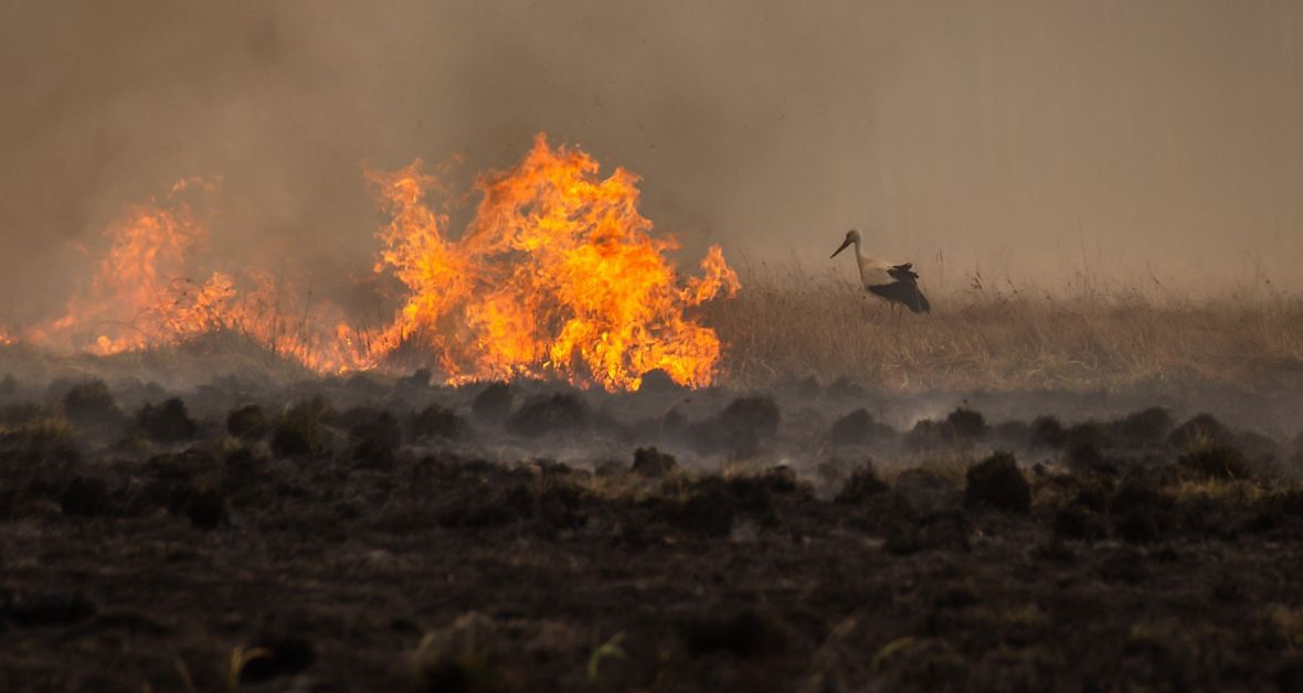Kopytkowo, 20 kwietnia 2020 roku. Pożar w Biebrzańskim Parku Narodowym