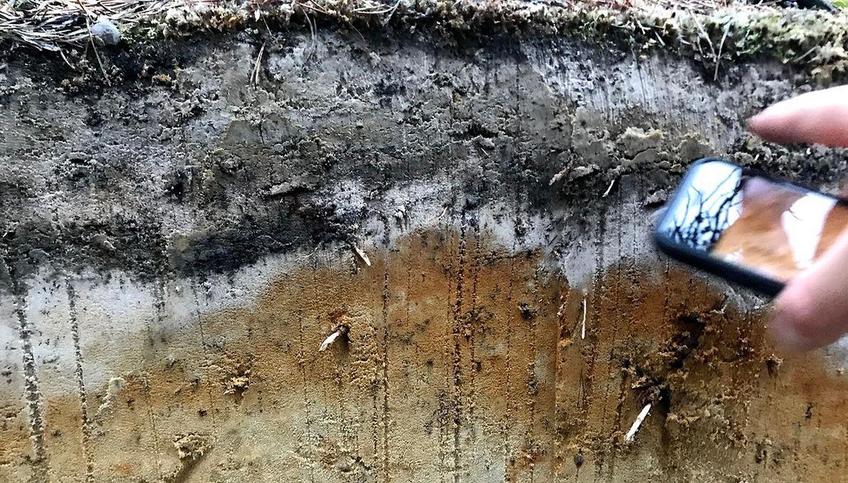 Zmarzlina nie płonie tak efektownie jak las. Ale skutki pożarów na wielką skalę są niszczące dla środowiska i klimatu