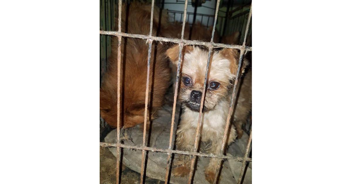 Psy w pseudo hodowlach trzymane są w katastrofalnych warunkach
