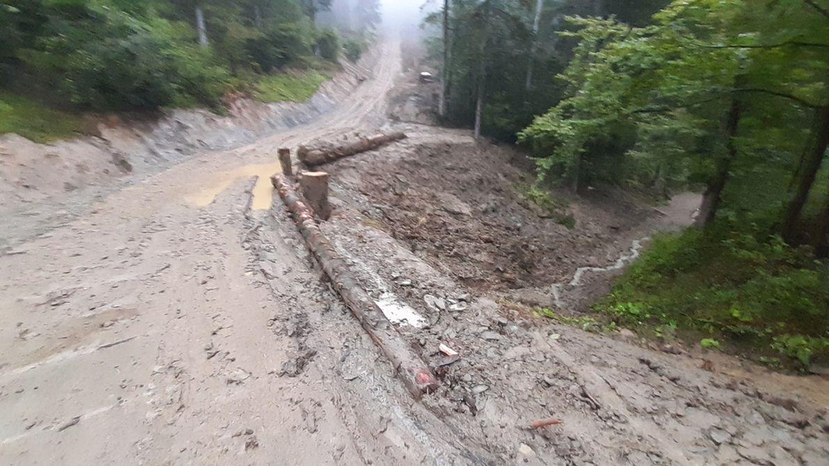 Gęsty system dróg zrywkowych i wywozowych jest dla lasów górskich nie mniej szkodliwy niż wycinka. Przyśpiesza odpływ wody po ulewach, sprzyja powodziom i erozji gleby (nadl. Lutowiska)