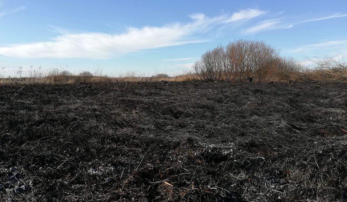 Pożar zaczął zagrażać okolicznym wsiom. W Kopytkowie zatrzymał się kilkanaście metrów przed domami