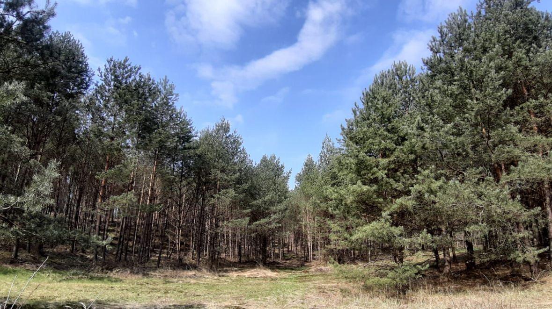 Leśnicy wskazują, że w okolicach kopalń utworzył się tzw. lej depresyjny, czyli trwałe obniżenie poziomu wód podziemnych. To oznacza, że las, który nadal się odbudowuje, może wyschnąć
