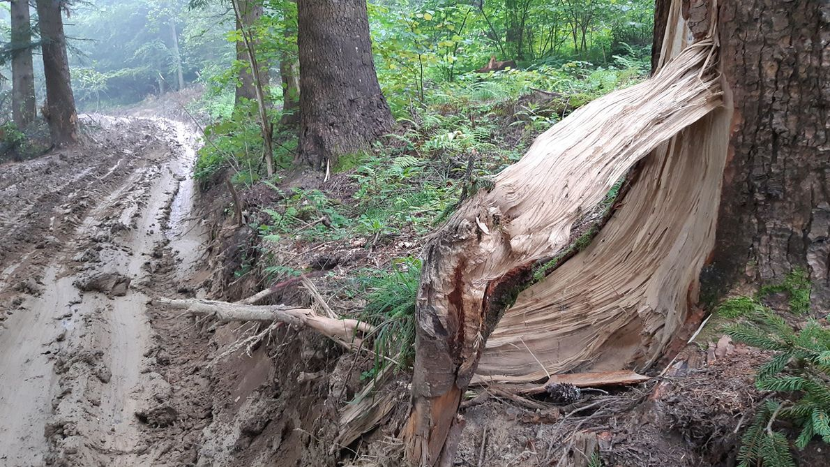 Prace w lesie bywają motywowane walką z zahubieniem drzewostanów, ale w czasie ich trwania uszkadza się wiele drzew, otwierając je na zarodniki hub. Niebawem leśnicy tu wrócą, by walczyć z hubami