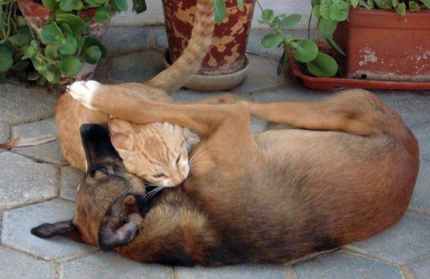 Pies Kot I Ogon Co Mówi Twoje Zwierzę Gadżetomaniapl