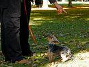 Szkolenie w grupie dla szczeniaków