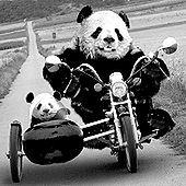Panda Weranda