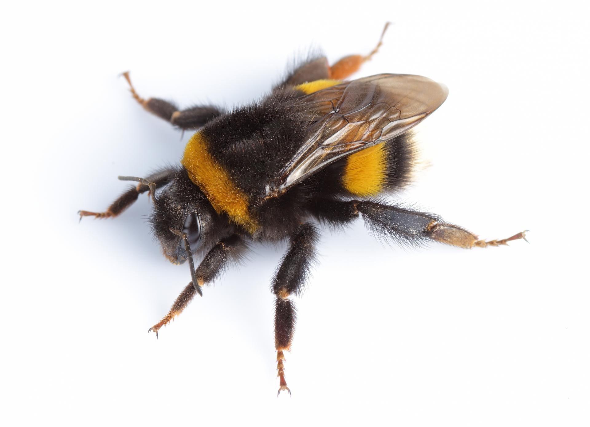 przerażający pszczoły w penisie jak poprawić erekcję z zapaleniem prostaty