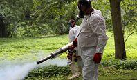 Walka z komarami i kleszczami nierówna, ale do wygrania. Koszt: od 350 zł za nieduży ogród