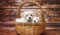 Podatek od psa 2020. Kogo obowiązuje i ile wynosi?