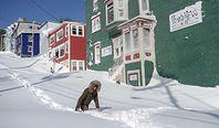 Kanada. Rekordowe opady śniegu. Mieszkańcy publikują szokujące materiały