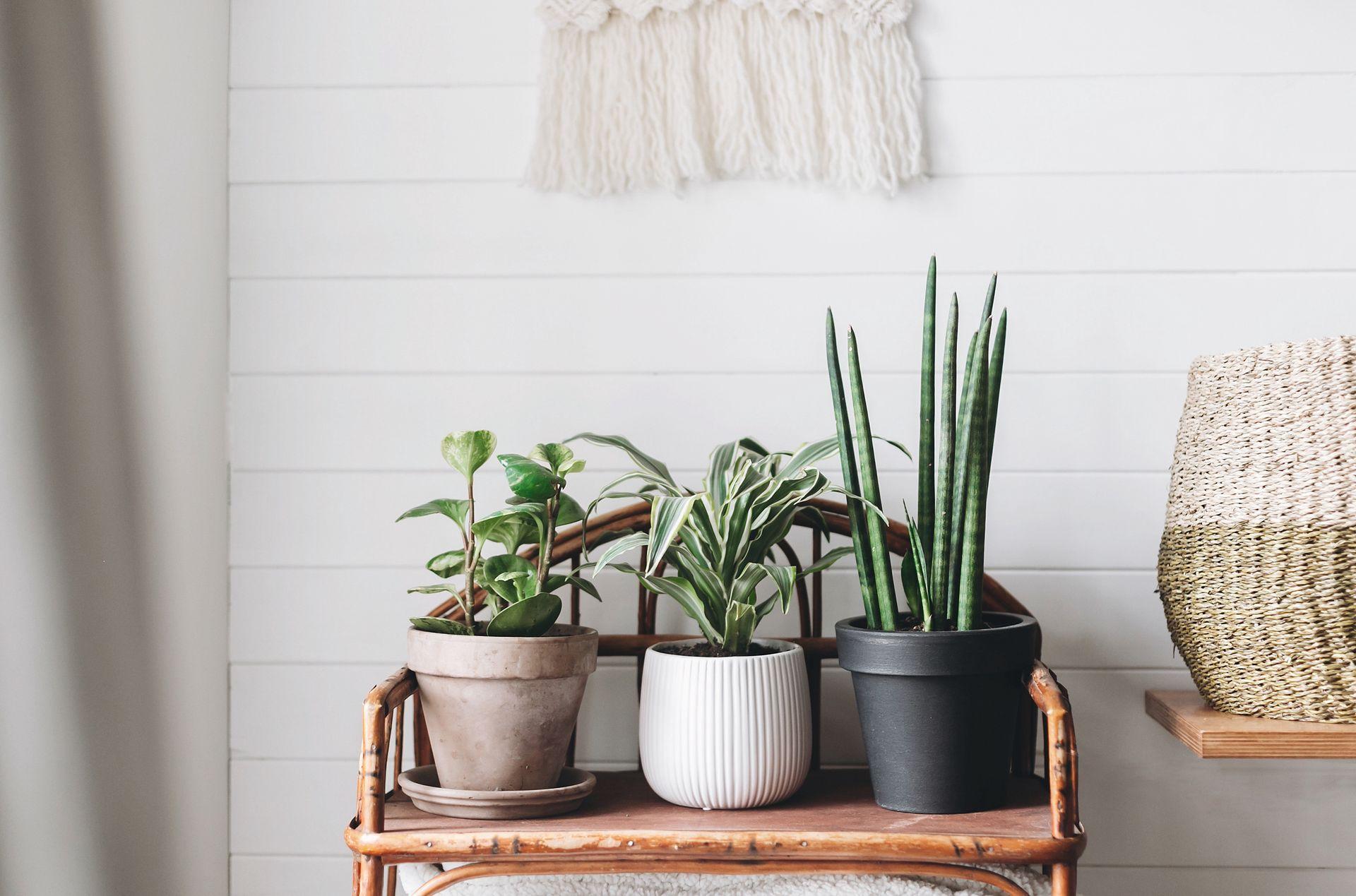 12 Gatunkow Roslin Ktore Nie Potrzebuja Swiatla Idealne Do Ciemnego Mieszkania Wp Dom