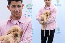 Różowy Nick Jonas ze szczeniaczkiem w objęciach walczy o zdrowie Amerykanów i zasobność własnego portfela