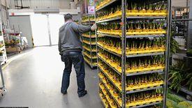 Producenci i sprzedawcy kwiatów dołączyli do branż, które wpadły w ogromne tarapaty
