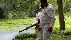 Komary. Zaczyna się plaga