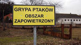 Ogniska ptasiej grypy zostały zlokalizowane m.in. na Lubelszczyźnie