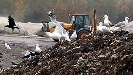 Rosnące góry śmieci.