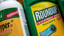 Składnik Roundupu, który wywołał raka, czyli glifosat jest najpowszechniej stosowanym w świecie środkiem chwastobójczym.