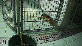 Kadr z filmu nagranego w Laboratorium Farmakologii i Toksykologii w Mienenbuttel.