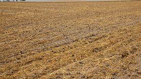 Susza. Panującą suszę najdotkliwiej odczuwają rolnicy w województwie lubuskim.