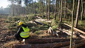 W piątek wojewoda pomorski Dariusz Drelich wydał zgodę na wycinkę drzew pod przekop Mierzei Wiślanej.