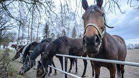 Jeszcze w 2015 roku państwowe stadniny sprzedały konie za 4 mln euro.