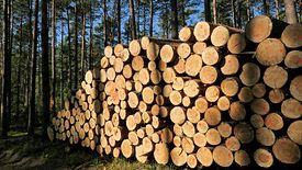 Lasy Państwowe kontra branża. Mali przedsiębiorcy zarzucają spółce, że ta faworyzuje korporacje