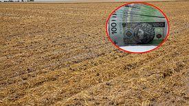 Tegoroczna susza w wielu rejonach Polski, nawet nie pozwoliła wzejść zasianym roślinom.