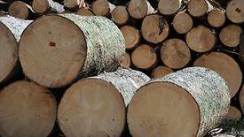 Głównym dochodem przedsiębiorstwa jest sprzedaż drewna