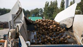 Już za dwa lata w Polsce uprawy kukurydzy mogą być wyższe niż ziemniaka.