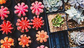 Najmodniejsze rośliny doniczkowe