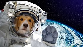 Zwierzęta w Kosmosie - były tam przed człowiekiem