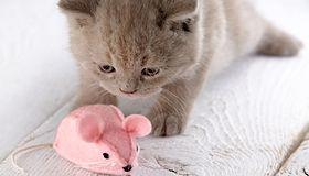 Inteligentne gadżety dla zwierząt. Co kupić psu bądź kotu?