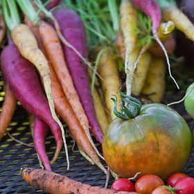 GMO. Przyszłość rolnictwa, a nie jego zagłada