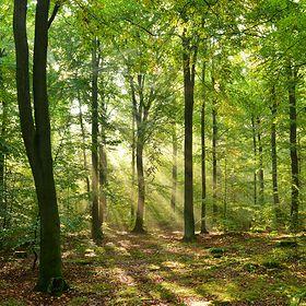 Polskie lasy są pełne tajemnic