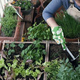 Warzywnik – zdrowy pomysł na balkon