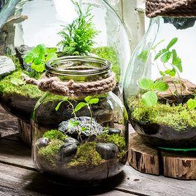 Miniaturowy ogród w szkle. Jak samodzielnie  i niebanalnie go zaaranżować?