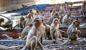Małpy wykorzystywano do zbierania kokosów. Sklepy wycofują produkty